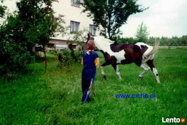 kujawsko-pomorskie agroturystyka dla dzieci ze zwierzętami