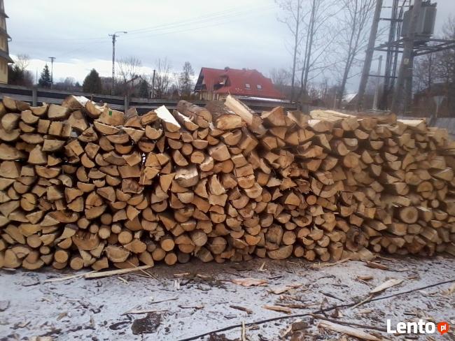 drewno buk