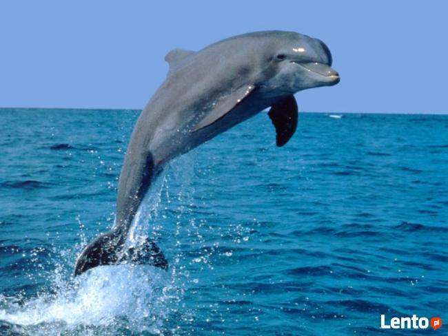 Aqua aerobik, aqua fitness, nauka pływania, szkoła pływania