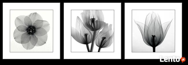 nowoczesny tryptyk kwiaty 150x50 cm