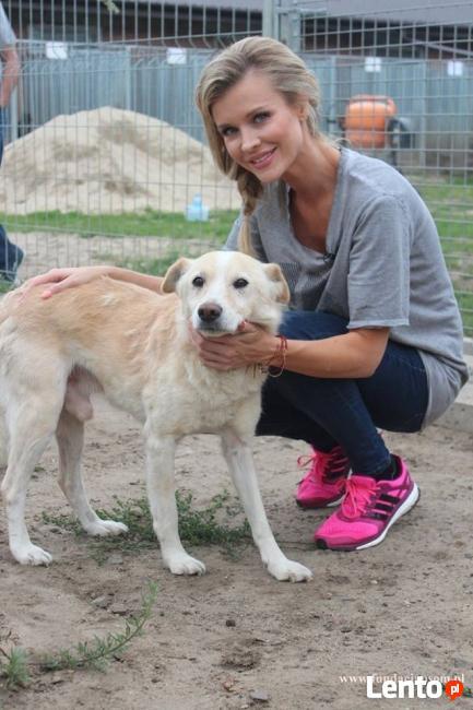 Valentino- Joanna Krupa poleca do adopcji!