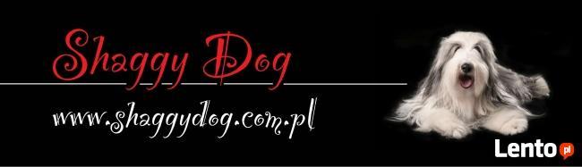 SHAGGY DOG - SPA, hotel, minisklep dla psa i kota