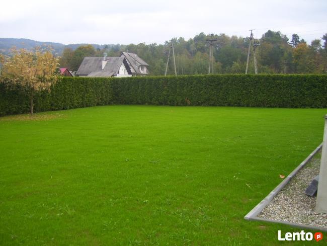 Usługi ogrodnicze-wycinka drzew i,formowanie krzewów,trawnik