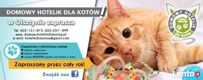 Domowy hotelik dla kotów