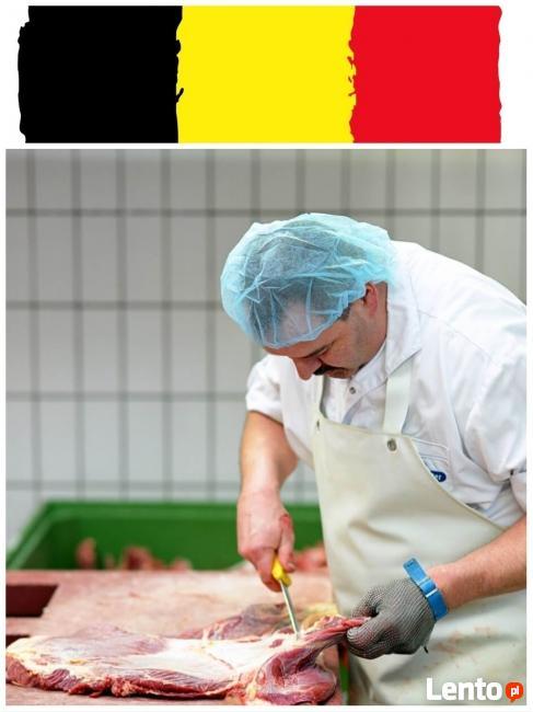 RZEŹNIK - wykrawacz Belgia, pod zakład