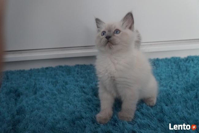 miłośnicy kotów randki online