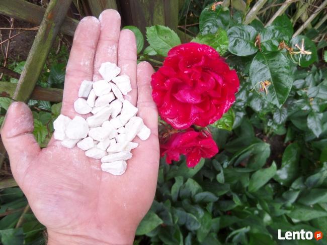 Grys Biała Marianna 10-16mm Kamień do Ogrodu