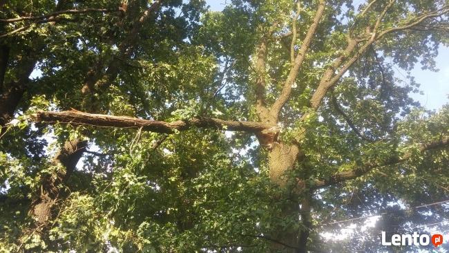 Drzewa wycinamy i przycinamy