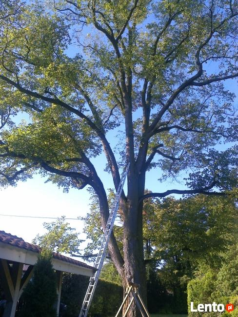 Wycinka i pielęgnacja Drzew- Alpinistycznie z lin