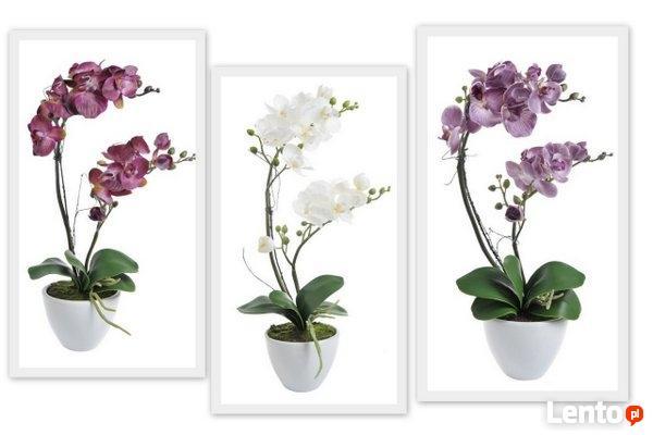 Dekoracje dla domu i biura, artykuły florystyczne,susze itp.