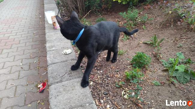 znaleziono kota