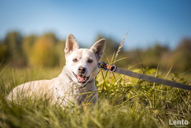 Przepiękny pies czeka na wyjątkową osobę!