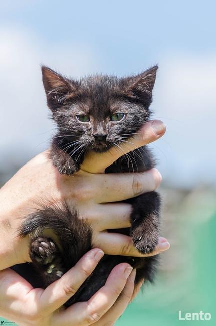 Kappa - kocię, które powinno zamieszkać z innym kotem