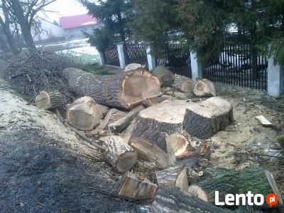 Wycinka drzew, karczowanie pni Drwinia