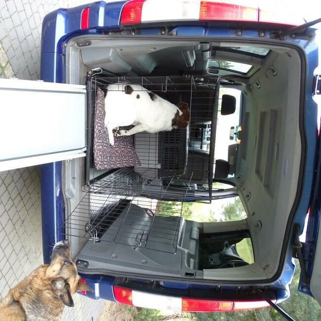 Transport zwierząt domowych
