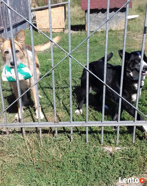 Saba, cudowny piesek rodzinny szuka domu.