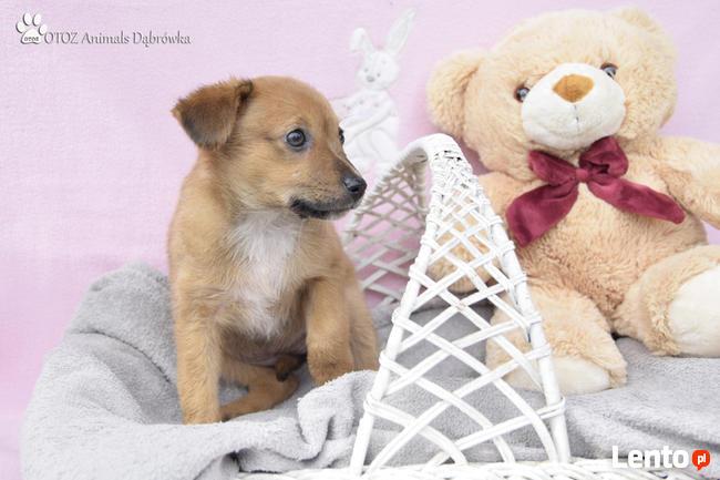 OTOZ Animals Dąbrówka - Kto pokocha Małą Mi ?