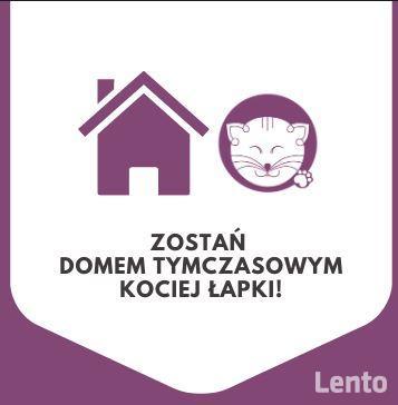 Dom tymczasowy dla kotów - poszukiwany