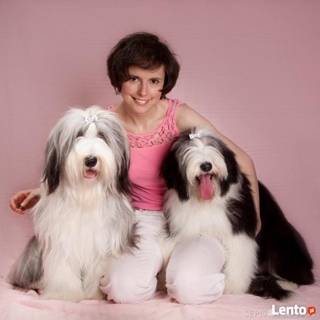 Shaggy Dog Fryzjer Hotel Sklep Dla Psów I Kotów Luboń