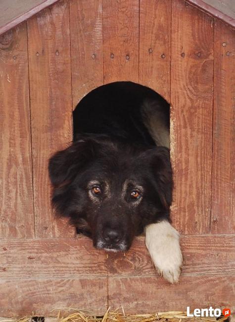 psy ze schroniska szukają domu