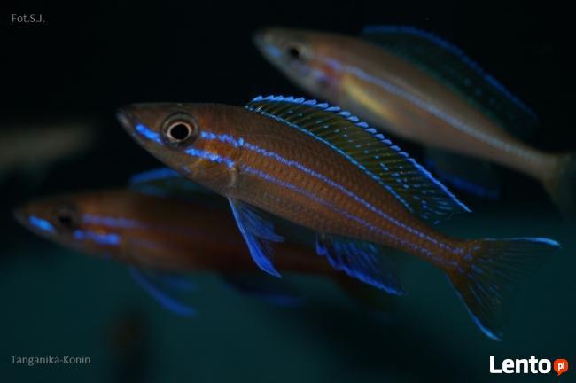niebieskie ryby randki tak dość serwisów randkowych