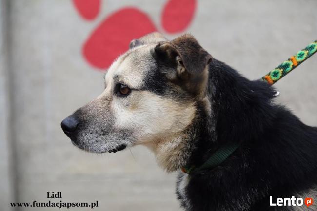 Lidl - spokojny psiak