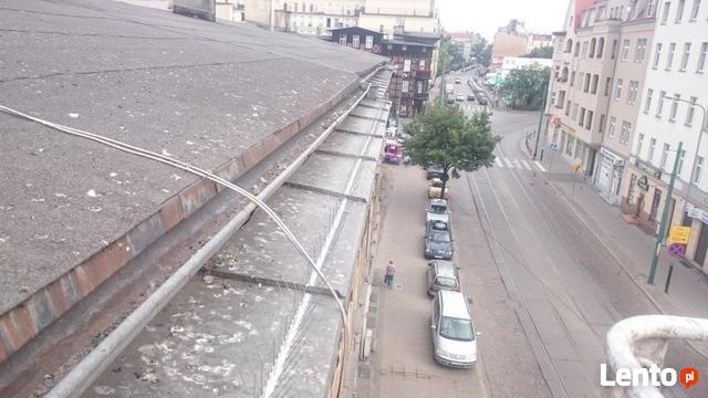 Montaż kolcy na gołębie Poznań, Mosina, Puszczykowo,
