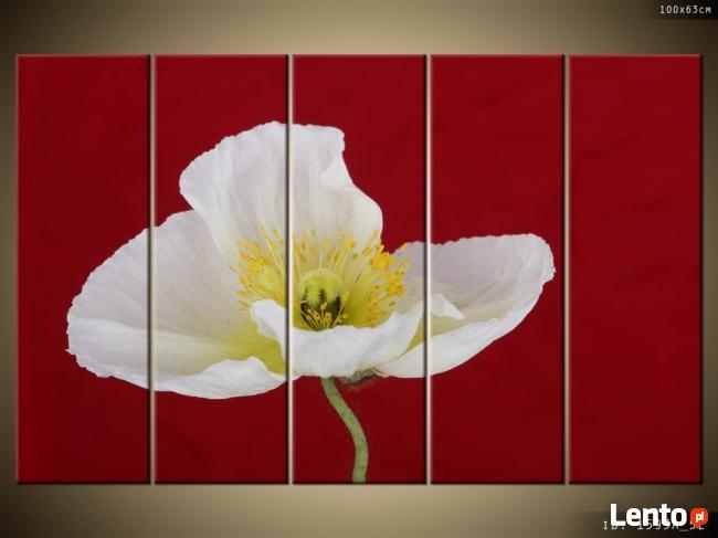 Biały mak, Obrazy, Canvas, Obrazy na płótnie, prezent