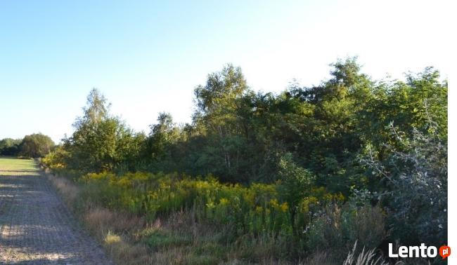 Wilkowa wieś działka budowlana 2 ha idealna dla dewelopera