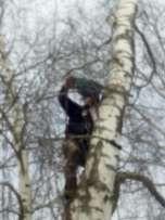 Wycinka ścinka trudnych drzew