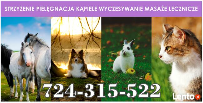 Fryzjer dla zwierząt Rufus Poznań