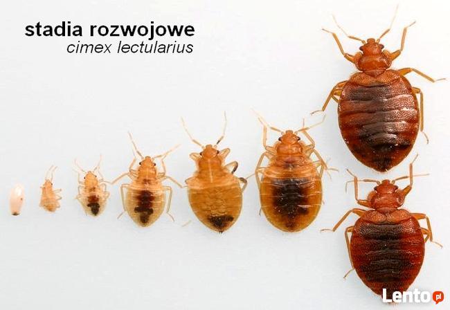 Dezynsekcja pluskwy Warszawa Praga-Północ.