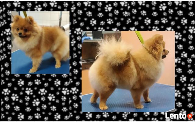 Fryzjer dla psów Huta Stara B - Salon Pieskie Sprawy