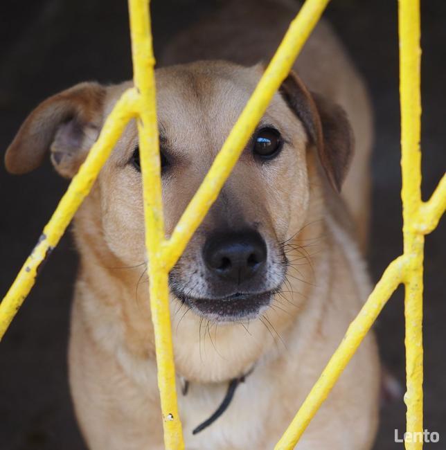 5-letni pies szuka domu bez dzieci i zwierząt!