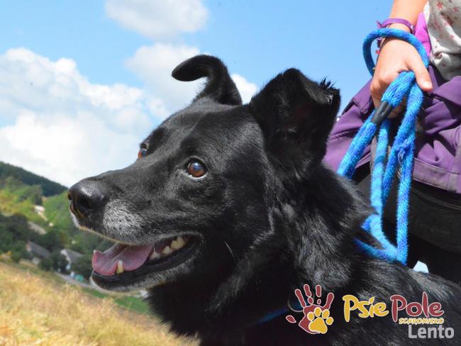 TYTANEK-wspaniały, super miły, duży czarny psiak-szukamy DOM