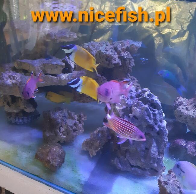 Akwarystyka ryby