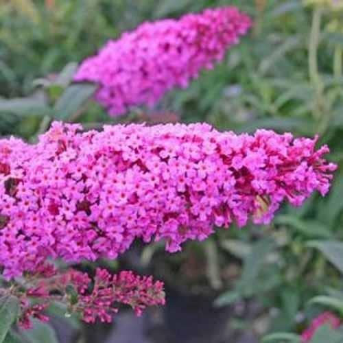 Sprzedam piękne roślinki do Twojego ogrodu