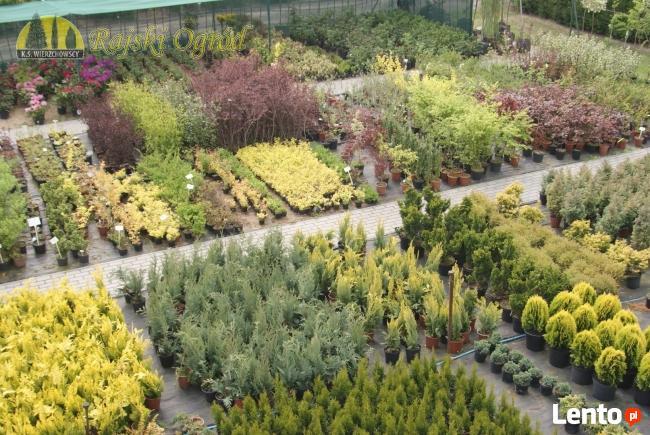 Największy wybór roślin, zakładanie i pielęgnacja ogrodów