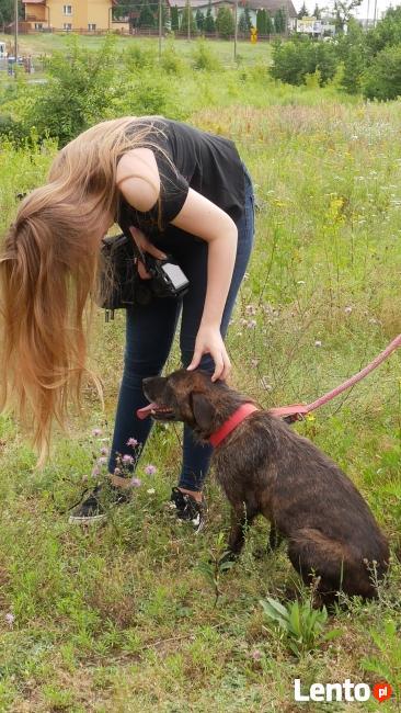 Dostojny psiak w typie teriera szuka opiekuna
