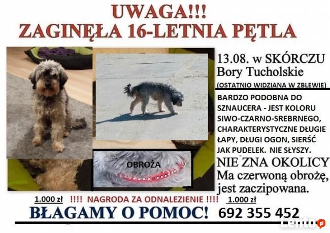zaginęła w Borach Tucholskich ale teraz może być wszędzie :(