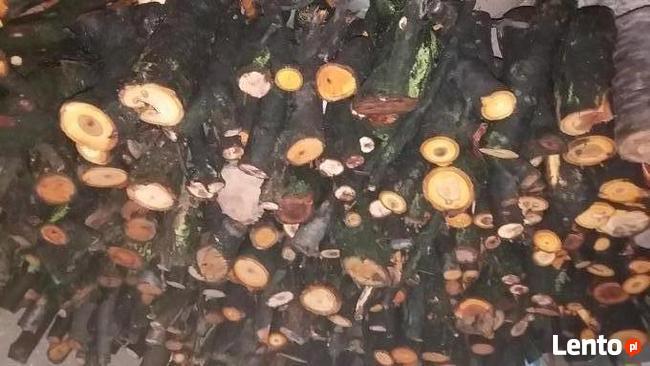 Drewno / Drzewo owocowe do wędzenia 30kg za 17zł
