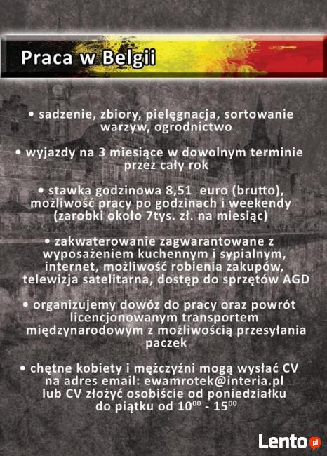 praca- zbiór warzyw i owoców Belgia