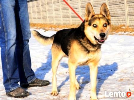 RAPUŚ-bardzo przyjazny,mądry,wesoły,energiczny pies szukaDOM