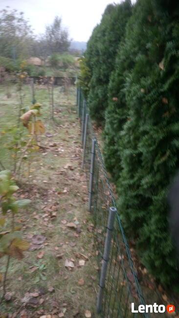 Ogrodnik złota rączka do wynajęcia do prac ogrodowych i gosp
