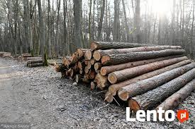 Wycinka Skup lasu na Pniu Sosna Świerk Brzoza Olcha Całe Pod