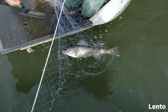 Sieci rybackie Wonton 53mm/3,20m/150m