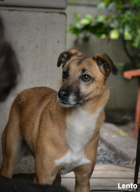 Pilnie szukamy domu dla niewielkiego psa po przejściach!
