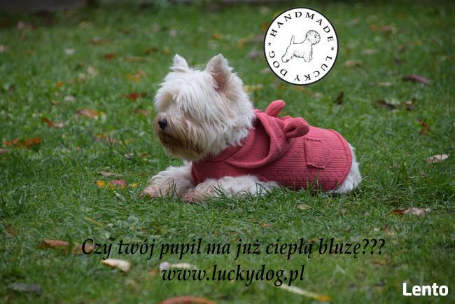 Obroża, szelki, smycz, legowisko, ubranko dla psa LUCKY DOG