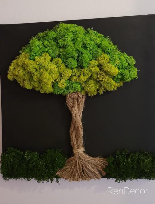 Żywy obraz. Drzewko z mchu.