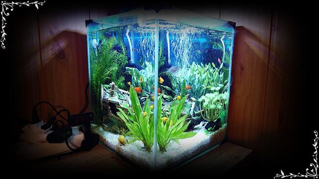 Akwarium CUBE kostka 30x30x35cm 30L Krewetkarium +Filtr+LED